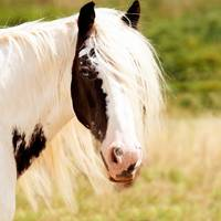 White Brown Horse Animal Portrait
