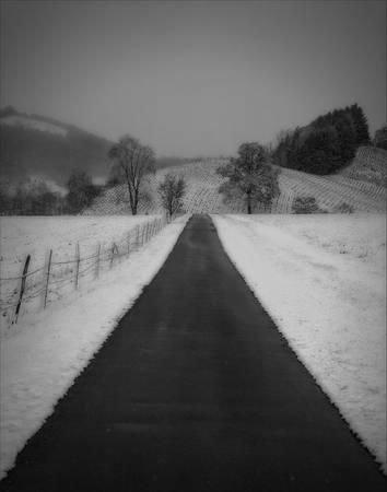 """""""Early Snow Tree Farm"""""""