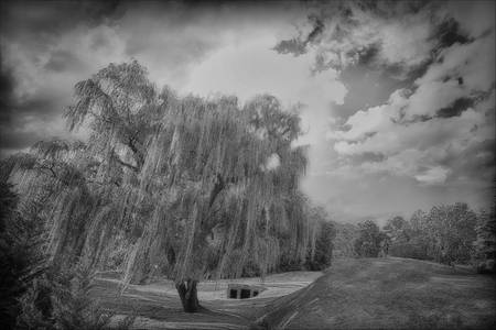 """""""Modern Ruins and Weeping Tree"""" #2"""