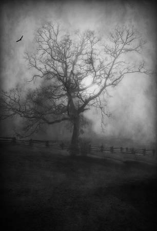 """""""A Sculpture in Fog"""" #2"""