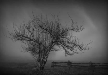 """""""Lonely Tree"""" Cataloochee Ranch, NC"""