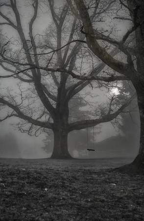 """""""Moonlight Swing"""" Cataloochee Ranch, NC"""