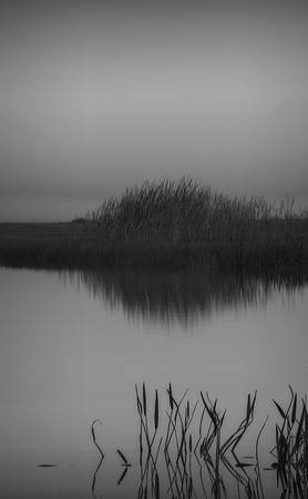 """Everglades Weeds as Abstract"""