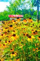 brown eyed susans at laura plantation