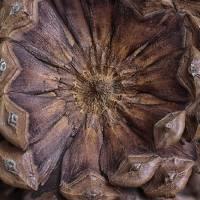 Pine Cone by Karen Adams