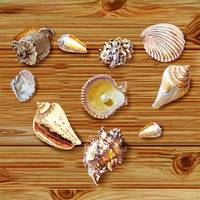 Love Seashells Heart