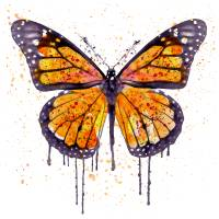 """""""Monarch Butterfly Watercolor"""" by MarianVoicu"""