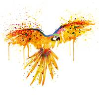 Flying Parrot Watercolor