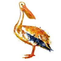 Pelican Watercolor Painting