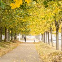 Walking under the trees in Autumn I Art Prints & Posters by Victor Ramon Ballesta