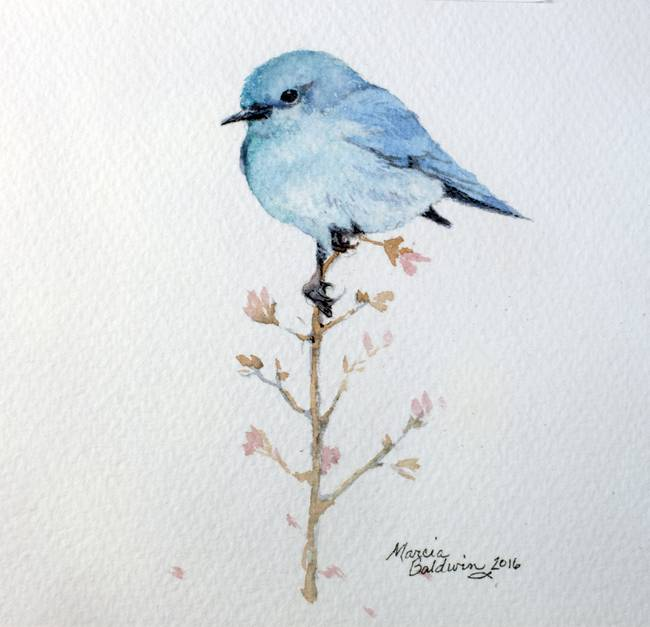 bluebird perched 5x5