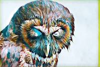 Owl Bird Wildlife Print Rogue Art