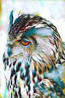 Owl Bird Wildlife Print