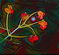 Red guelder-rose on dark sky