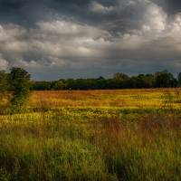Fields of Gold by Jim Crotty