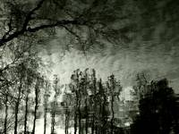 Black and White Trees Reflection