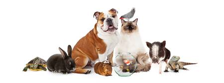 Collection of Domestic Pets Together