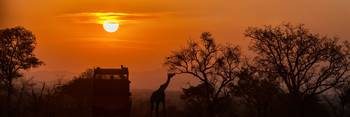 African Safari Sunset Silhouette