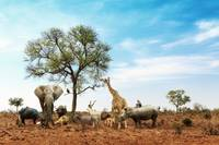 African Safari Animals Together Around Tree