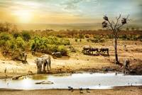South African Safari Wildlife Fantasy Scene