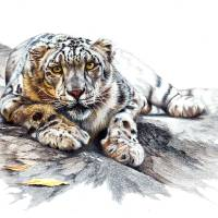 Snow Leopard, Ethereal Spirit Art Prints & Posters by Peter Williams