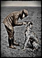 War Dog and soldier WWI