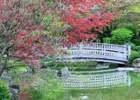 Japanese Garden Bridge in Springtime by Carol Groenen