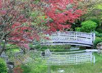 Japanese Garden Bridge in Springtime