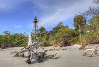 Sanibel Lighthouse Behind the Stump