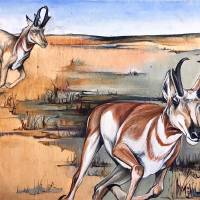 Antelope on the Run Art Prints & Posters by Cathryn Reitler (McIntyre)