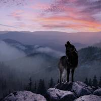 Lone Wolf at Sunset Ridge by I.M. Spadecaller