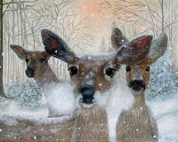 Deer in the Snowy Woods