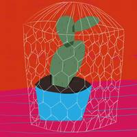 Bontaical: Cactus in a Cage