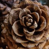 Pine Cone Textures by Karen Adams