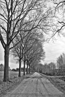 Dutch Road in Winter by Carol Groenen