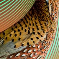 Fins & Feathers Abstract by I.M. Spadecaller