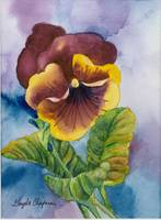 A Pansy For Your Thoughts