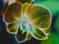 Digital Art Glowing Golden Orchid Flower
