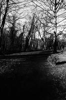 The Woodland Path 1 Black & White Photograph
