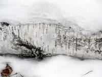 Log Peeking Out of Snow