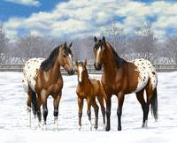 Bay Appaloosa Horses In Snow