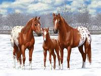 Chestnut Appaloosa Horses In Snow