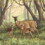 Whitetail Doe and Twin Fawns Prints & Posters