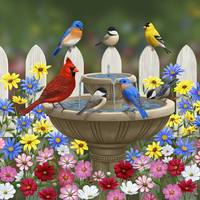 Colorful Birds Flowers and Bird Bath