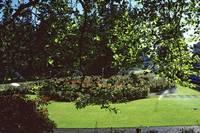 1984-5 UBC Campus 15 by Priscilla Turner