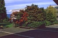 1984-5 UBC Campus 26 by Priscilla Turner