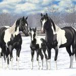 Black Paint Horses In Snow Prints & Posters