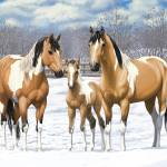 Buckskin Paint Horse Family In Snow Prints & Posters