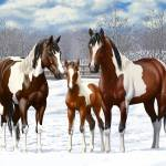 Bay Paint Horses In Snow Prints & Posters