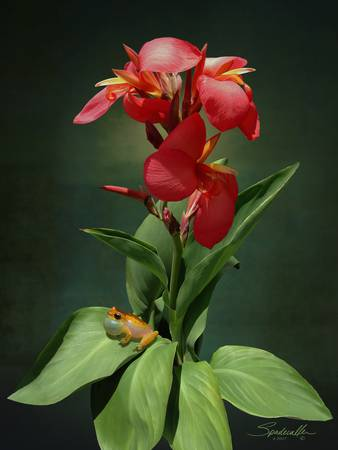 Canna Lily and Hourglass Tree Frog